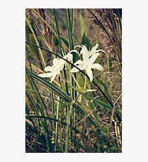 Random flower in swamp Photographic Print