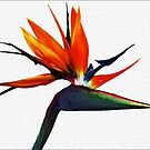 Bird of Paradise by Joy Rensch