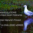 Banner for the Top 10 Winner by jesskato