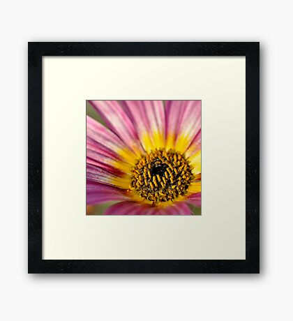 Come on in ~ Framed Print
