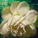 Secret Love by Marilyn Cornwell