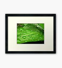 Green leaf of calla Framed Print