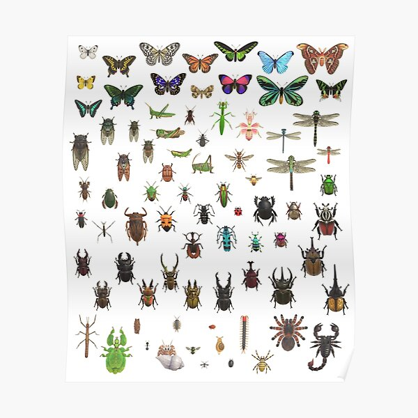 Animal Crossing New Horizons Critterpedia Insects Complete Taxonomy  Poster