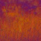 Fire Grass by Jack Grace