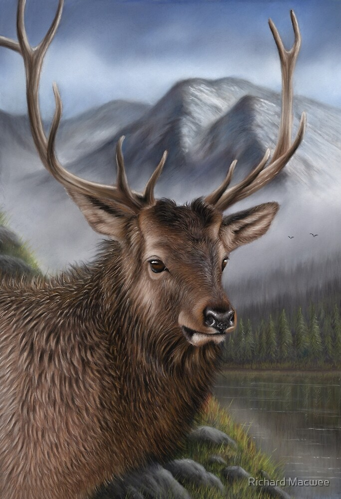 Wildlife Artwork of an Elk by Richard Macwee