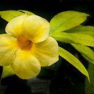 Sunshine Flower by Marilyn Cornwell