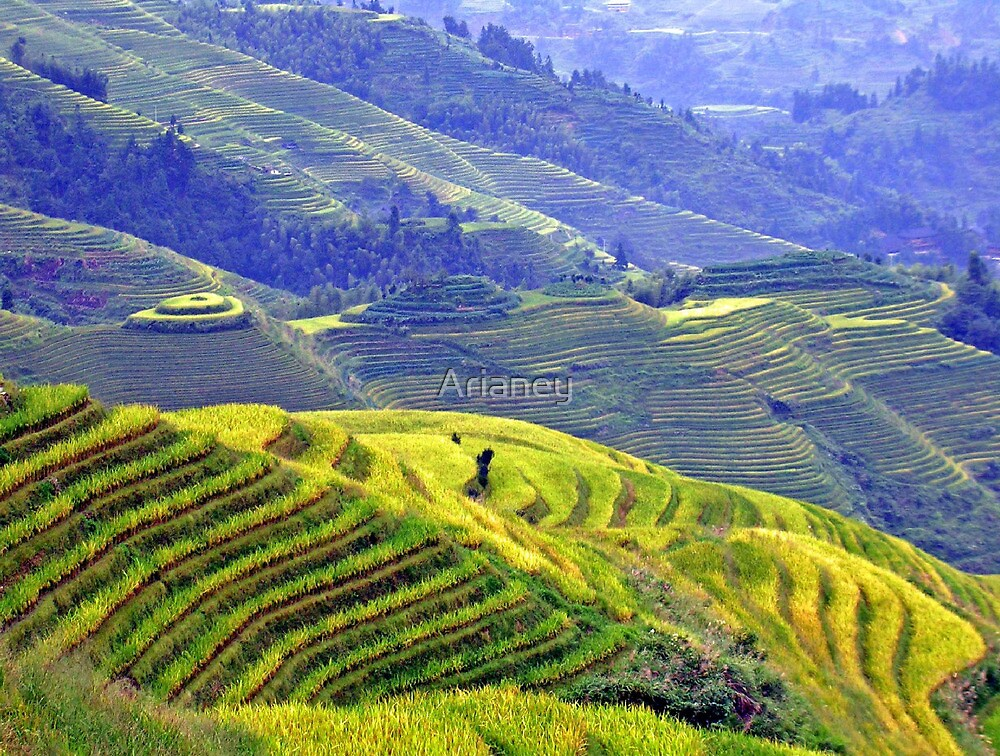 Rice terraces in Longsheng by Arianey