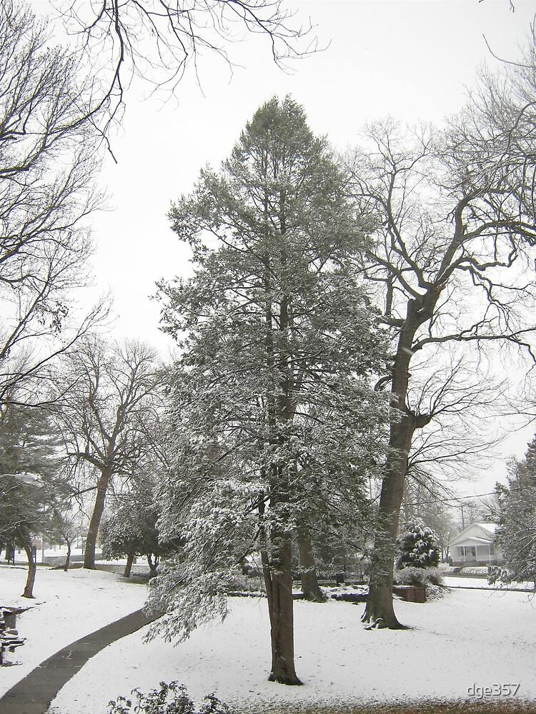 Feb. 19 2012 Snowstorm 20 by dge357