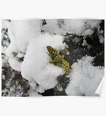 Feb. 19 2012 Snowstorm 22 Poster