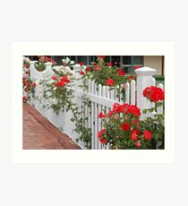 Roses On The Front Fence. Art Print