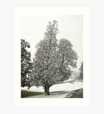 Feb. 19 2012 Snowstorm 27 Art Print