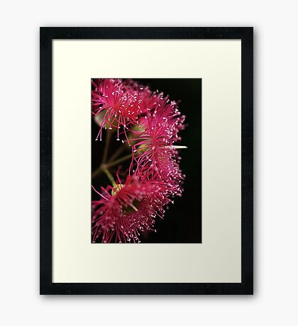 In Hot Pink Framed Print