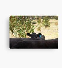 The Hidden Cow Canvas Print