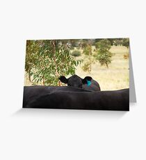 The Hidden Cow Greeting Card
