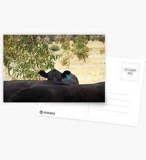 The Hidden Cow Postcards