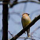 Sun Bird! by vasu