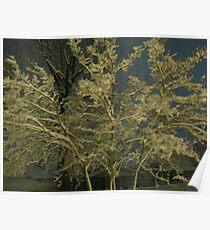 Feb. 19 2012 Snowstorm 41 Poster