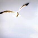 Flight by Jennifer Rhoades