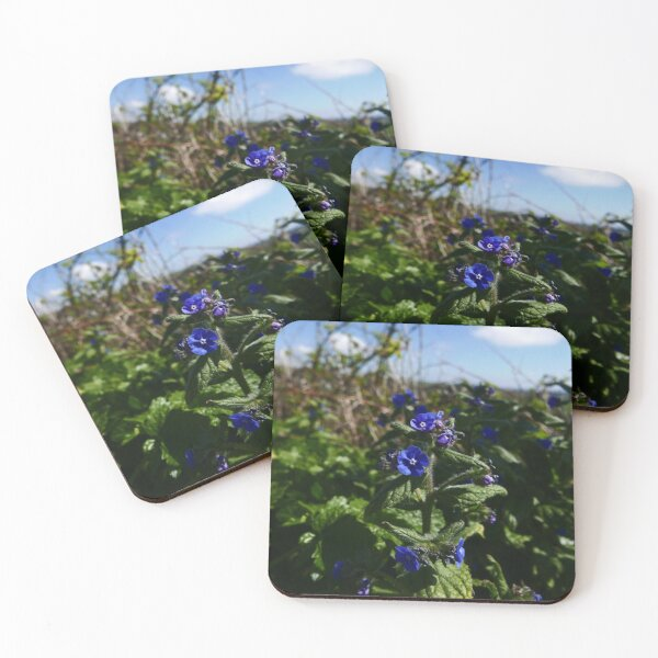 Green Alkanet (Pentaglottis sempervirens) Coasters (Set of 4)