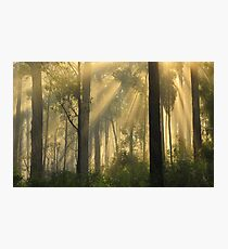 Morning Sunrise Marlo Vic. Photographic Print