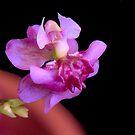 Tiny Dancing Lady by glennc70000