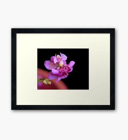 Tiny Dancing Lady Framed Print