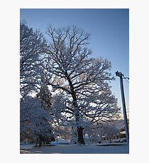 Feb. 19 2012 Snowstorm 122 Photographic Print