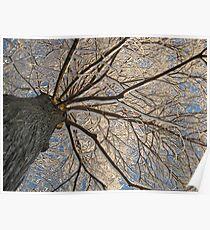 Feb. 19 2012 Snowstorm 152 Poster