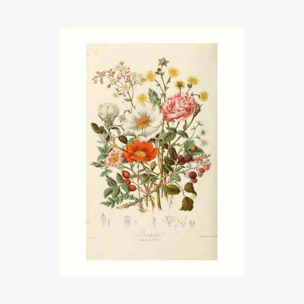 flores vintage Lámina artística