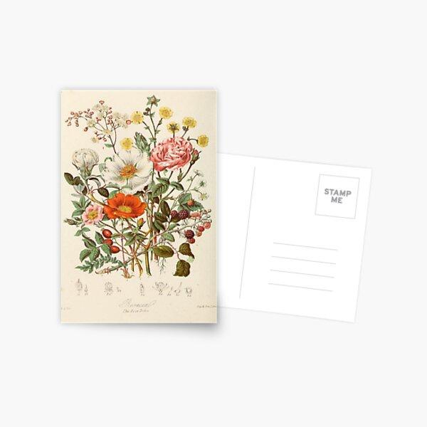 flores vintage Postal