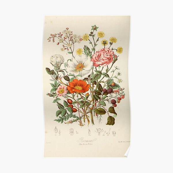 vintage flowers  Poster