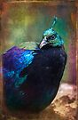 Finer Feathered Friends- Himalayan Monal by alan shapiro