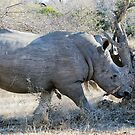 Charging Angry Rhino  by Michael  Moss