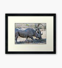 Charging Angry Rhino  Framed Print