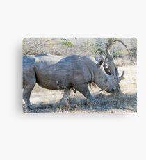 Charging Angry Rhino  Metal Print