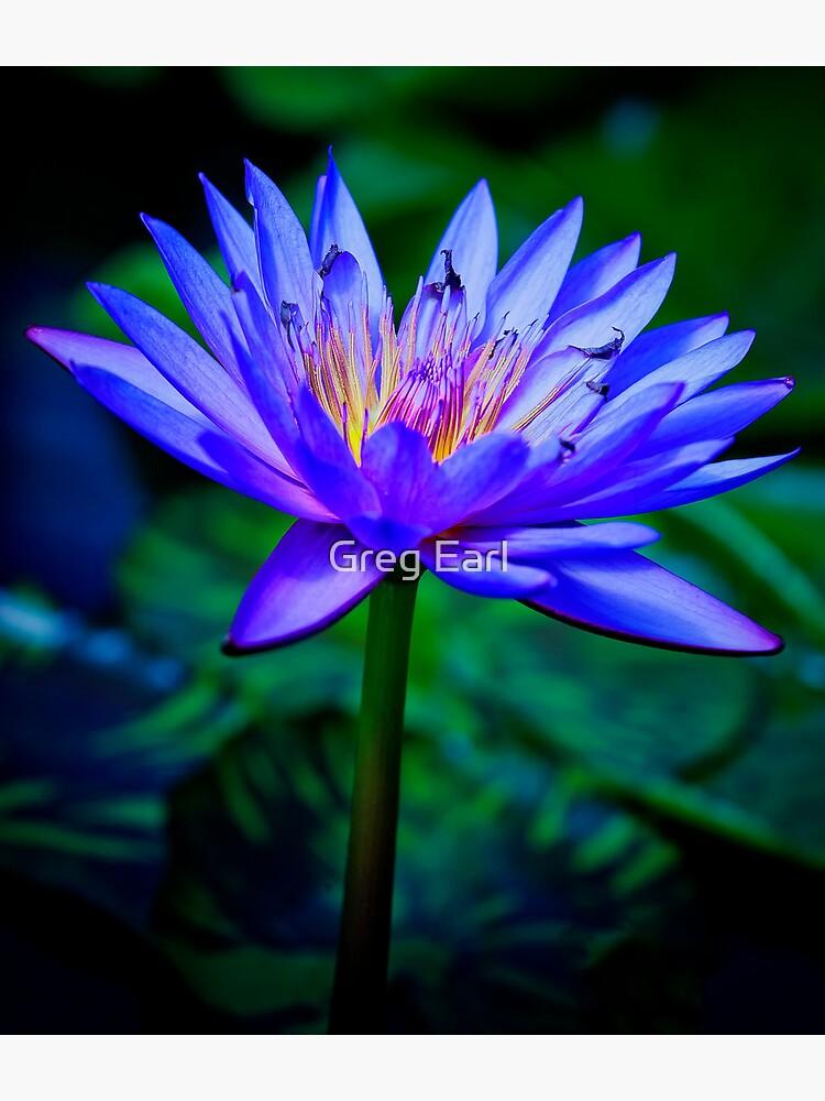 Blue Lotus by GregEarl