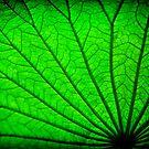 Lotus Leaf by Greg Earl