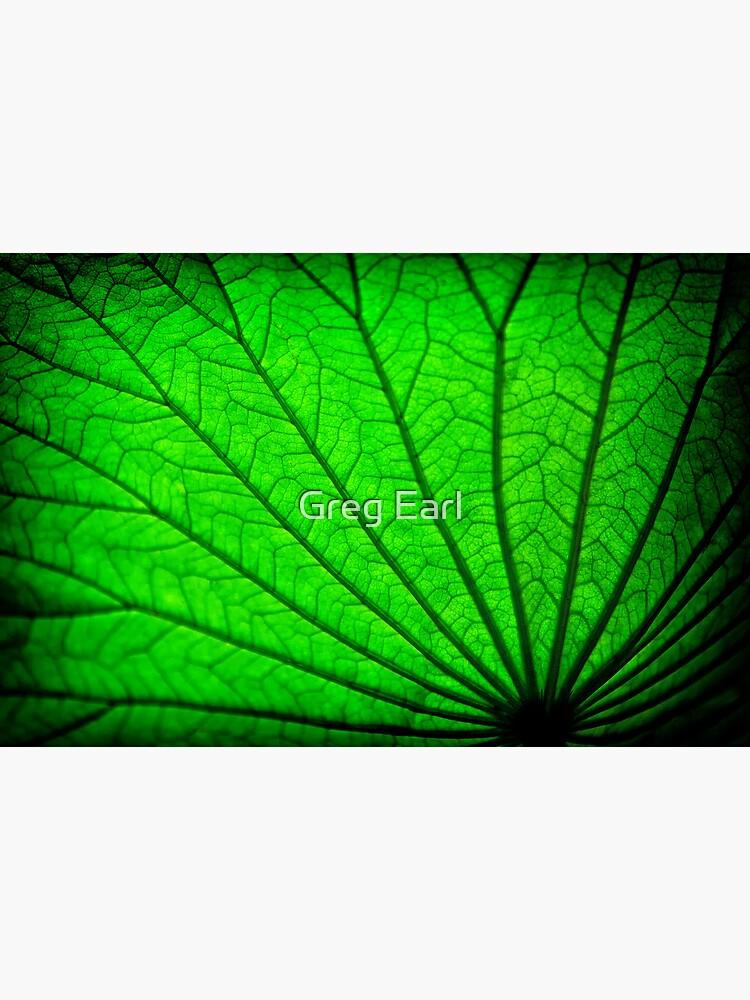 Lotus Leaf by GregEarl