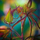 Fairy Buds by Greg Earl