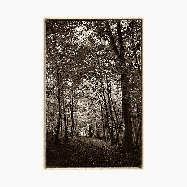 Rolduc Abbey Park, Kerkrade, Netherlands Photographic Print