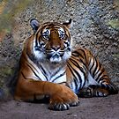 Tiger by zzsuzsa