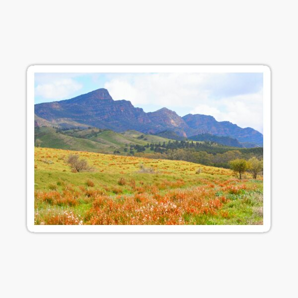 Flinders Ranges spring time, Outback, Australia Sticker