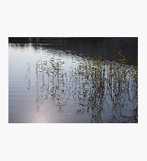 Water Reeds Photographic Print