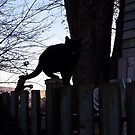Black cat on black fence by Dan Wilcox