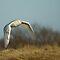 *Top 12 Bird Images of 2012*
