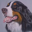 Bernese by Sharon Herbert
