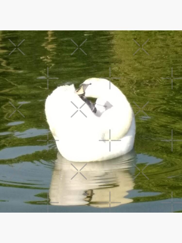 M.I. #67  ☼  Swan - Shot 25 (Pearson Park) by Naean