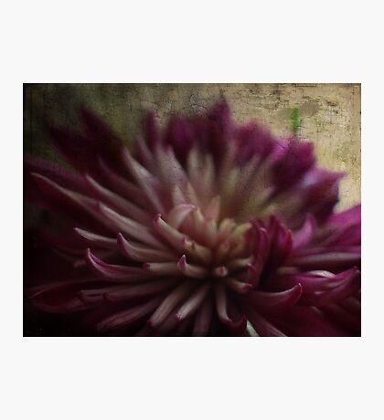 A Birthday flower Fotodruck