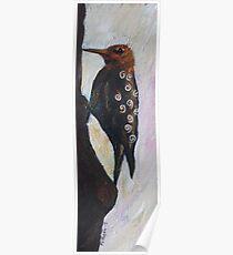 Redheaded woodpecker Poster