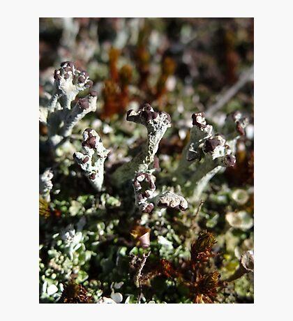 I Like Lichen Photographic Print